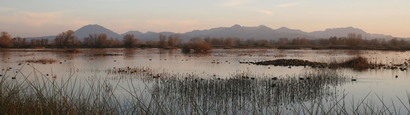 Wetlands with mountains on the horizon