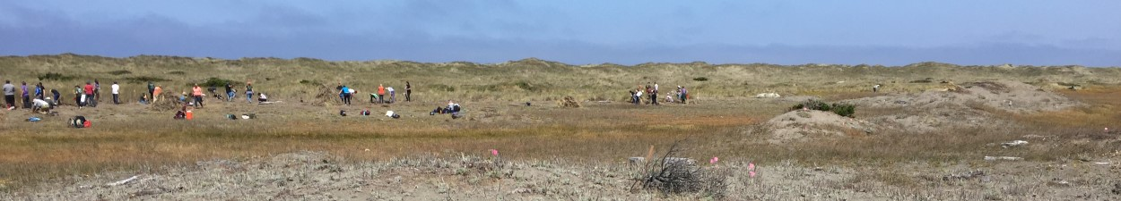 volunteers restoring coastal dunes