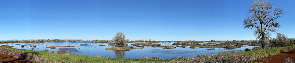 panoramic view of wetlands and Gray Lodge Ecological Reserve